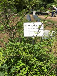 植物園2-2-225x300