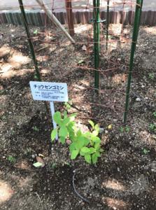 植物園2-3-223x300