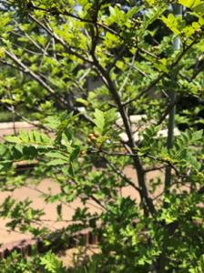 植物園2-6-224x300