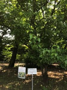 植物園2-1-224x300